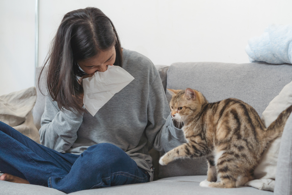 Simple Home Remedies For Cats Allergies